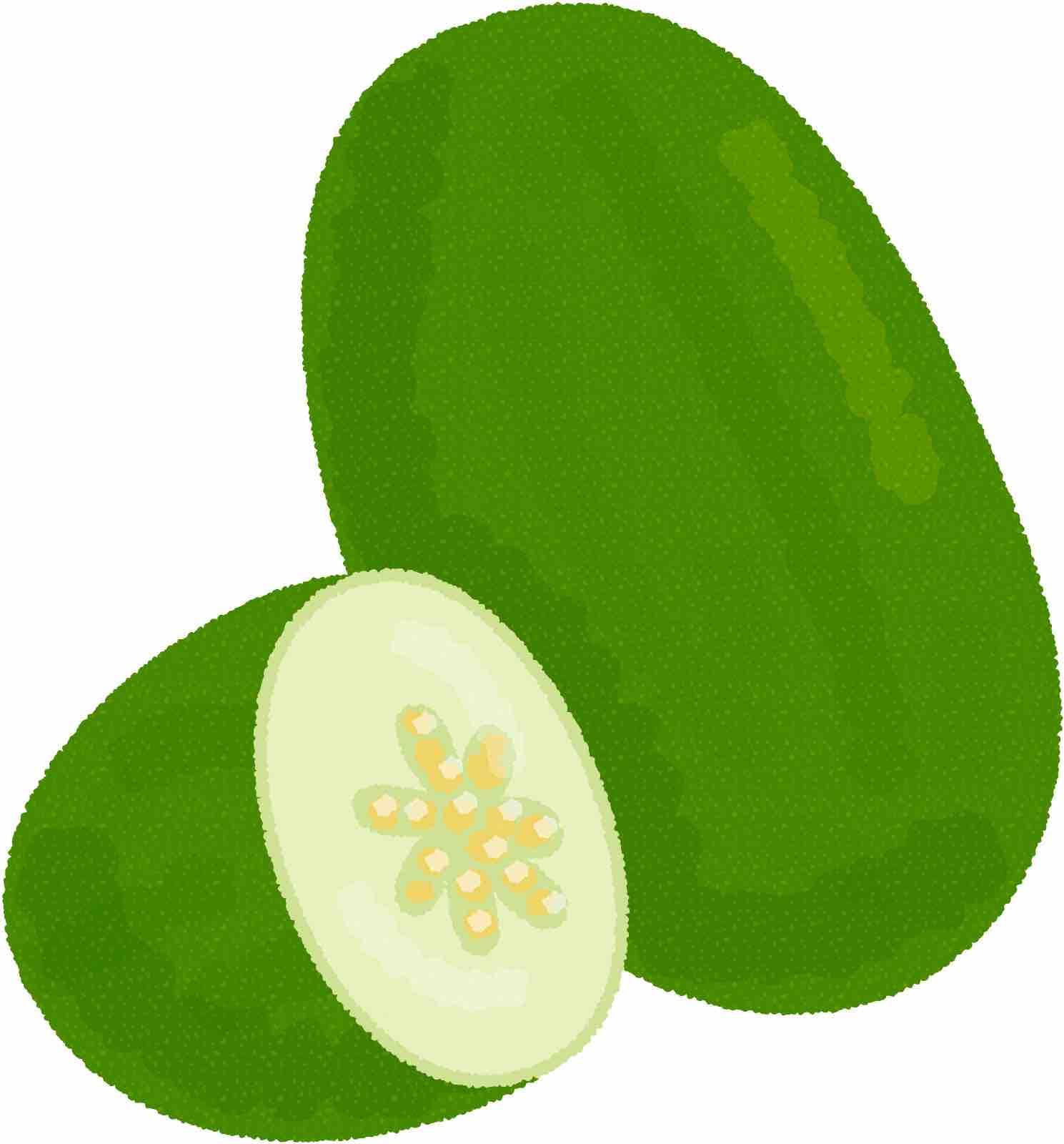 青瓜の値段・初夏には食べたい緑あざやかな瓜の特徴を紹介   FOOD LAYOUT