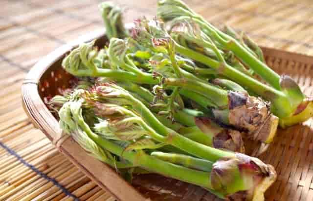 タラの芽 レシピ